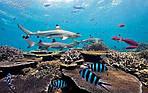 Отдых в Коста-Рике из Днепра / туры на Коста-Рику из Днепра (Карибские острова), фото 3
