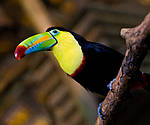 Отдых в Коста-Рике из Днепра / туры на Коста-Рику из Днепра (Карибские острова), фото 4