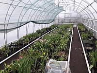Теплица Для выращивания тюльпанов
