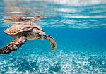 Отдых на Сейшелах (Сейшельских островах) из Днепра / туры на Сейшелы из Днепра (Маэ, Прасли, фото 3