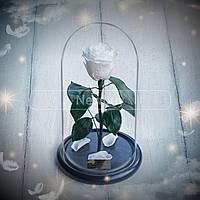 Стабилизированая роза в колбе 5 карат. Подарите любимой сказку!
