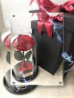 Стабилизированая роза в колбе 10 карат. Подарите любимой сказку!