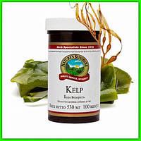Джерело натурального йоду Келп NSP (Kelp) бура водорість 100 капсул Original США