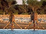 Отдых в ЮАР, Африка из Днепра / туры в ЮАР, Африку из Днепра, фото 3