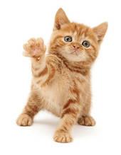 Корм для котів Profine