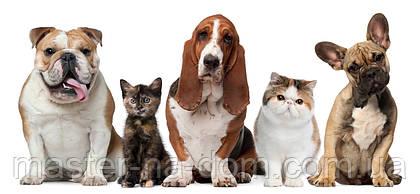 Как уменьшить вред для дома, который могут нанести домашние животные