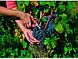 Ножницы P12719 для сбора урожая  Bahco, фото 3