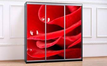 Шкаф Купе-05 2100х600х2400 Алекса мебель, фото 3