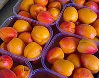 Саженцы абрикоса Вондер Кот ( Wonder Cot ) - ( США )