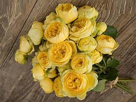 Роза Каталина (Catalina) Спрей, фото 3