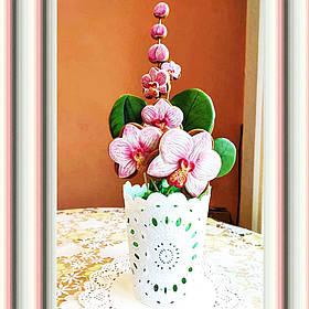 Орхидея букет с пряников