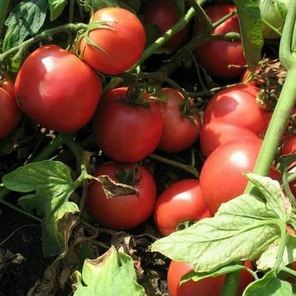 Семена Томат Тарпан F1 100 сем Nunhems 2240, фото 2