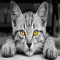 Художественный творческий набор, картина по номерам Серый кот, 40x40 см, «Art Story» (AS0502), фото 1