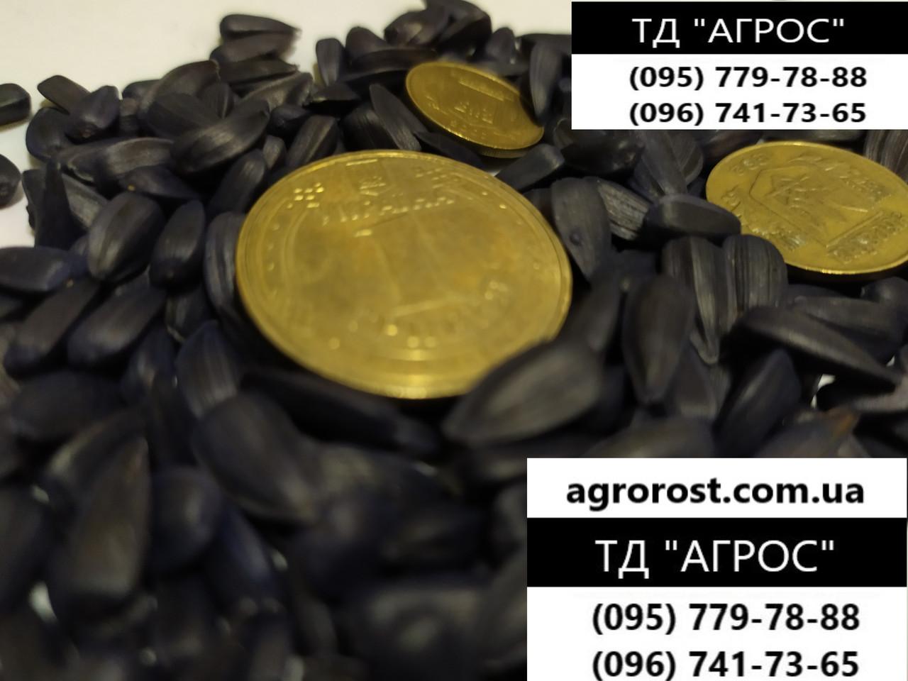 Гибрид подсолнечника ЗЛАТСОН, Высокоурожайные семена подсолнечника Златсон купить в Украине. Экстра