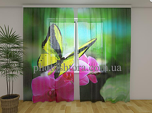 Фототюль панорамна Wellmira 250х260 Яскраві фарби