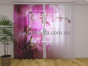 Фото Тюль Пурпурна орхідея 250 см х 260 см