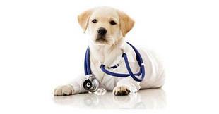 Терапевтические ветеринарные препараты
