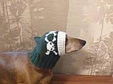 Шапка для собаки череп с костями, фото 5