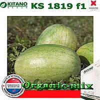 Арбуз КS 1819 F1, 1000 семян, KITANO SEEDS (Нидерланды)