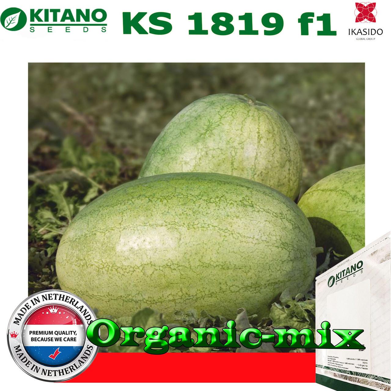 Семена, арбуз КS 1819 F1, 100 семян, KITANO SEEDS (Нидерланды)