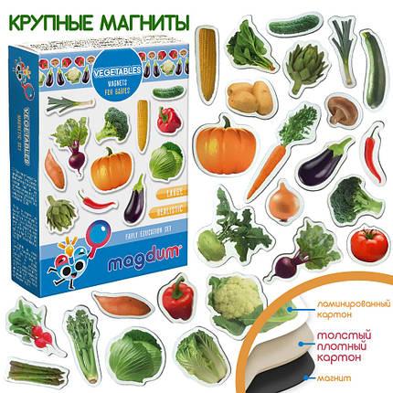 """Набор магнитов """"Овощи"""", ML4031-12EN, фото 2"""