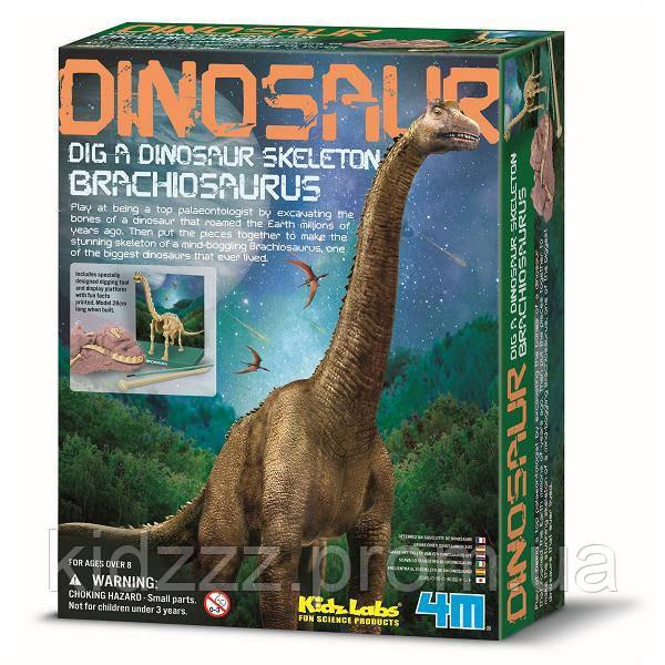 Набір для творчості 4M Скелет брахіозавра (00-03237)