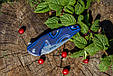 Нож складной Ruike Fang P105-Q, фото 8