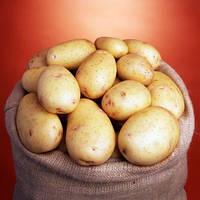 Семенной картофель Нектар / Насіннєва картопля Нектар / вага мішка 25 кг