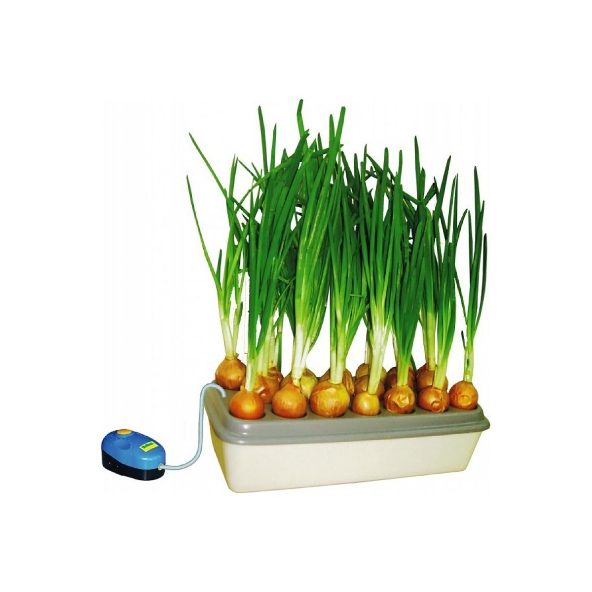 """Проращиватель для зеленого лука"""" Луковое счастье"""""""