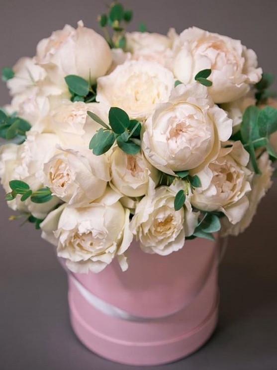 Роза Крим Пьяже (Cream Piaget) ч/г