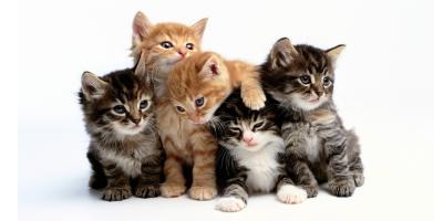 Для кошенят