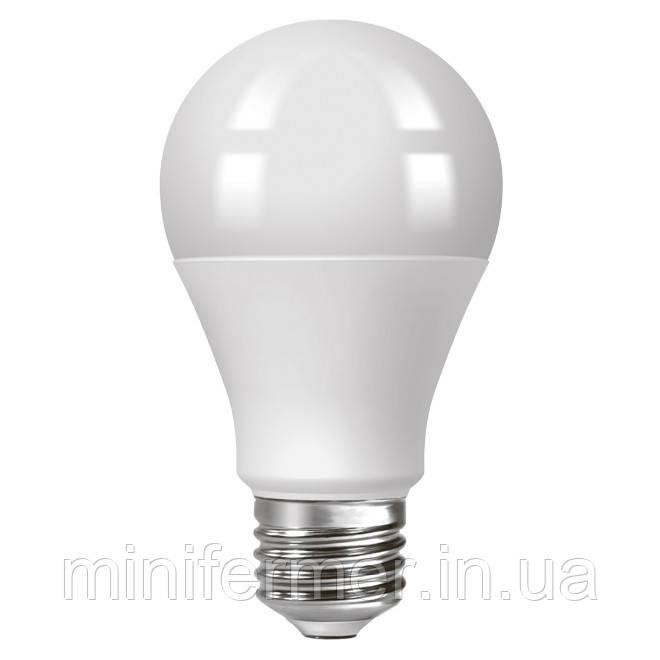 LED лампа для освещения птенцов  в брудере Prime 4W