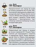 """Насіння дині середньостиглої """"Нектарин"""" (2 г) від Agromaksi seeds, фото 2"""