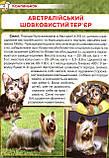 Собаки та цуценята від А до Я., фото 2