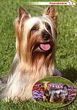 Собаки та цуценята від А до Я., фото 3