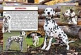 Собаки та цуценята від А до Я., фото 5