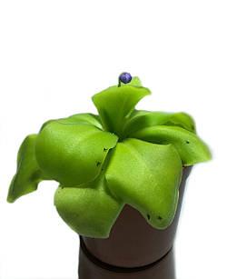 Хищное Растение Жирянка Тина AlienPlants Pinguícula
