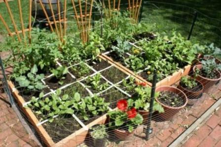 огород на маленькой площади