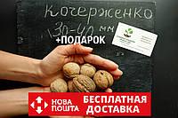 """Семена грецкий орех сорт """"Кочерженко""""(10 штук калибр 30-40 мм)  саженцы, насіння волоський горіх на саджанці"""