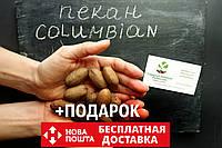 """Пекан (10 штук) сорт """"Columbian""""  (поздний) семена орех кария для выращивания саженцев (насіння на саджанці)"""
