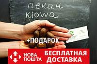 """Пекан (10 штук) сорт """"Kiowa"""" (ранний) семена орех кария для саженцев (насіння на саджанці) Carya illinoinensis"""