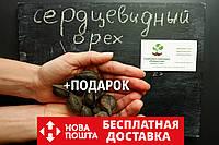 Орех сердцевидный семена (10шт) Juglans cordiformis для саженцев насіння горіх для саджанців + инструкция