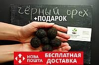Орех Чёрный семена (10 штук) Juglans nigra для саженцев, горіх чорний насіння, родственник грецкого