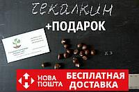 Чекалкин орех (Ксантоцерас) семена (10 штук)  для выращивания саженцев (насіння на саджанці) + инструкция