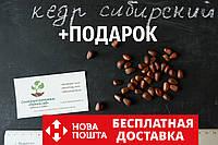 Кедр сибирский семена(20 штук) (сосна кедровая)для выращивания саженцев (насіння для саджанців)