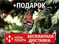 Секвойя семена 10 шт (вечнозелёная, красная, Sequoia sempervirens) для саженцев насіння на саджанці, фото 1