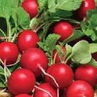 Ранний красный семена редиса  Semenaoptom 1 000 семян
