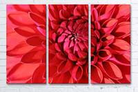 Модульная картина трио на холсте 3 в 1 Красный георгин 60х90 см