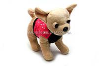 Интерактивная музыкальная игрушка «Гламурная собачка Кикки» M 3651, фото 2