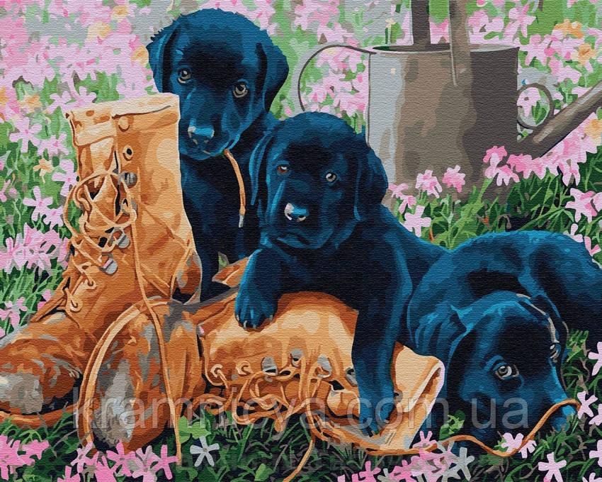 Картина по номерам Brushme 40х50 Шалости щенят (GX29300)